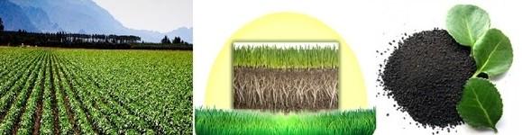 کود-خرید کود-کود شیمیایی-بهترین کود شیمیایی-کود های کشاورزی